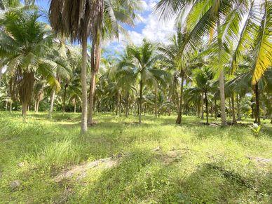 A beautiful palm grove