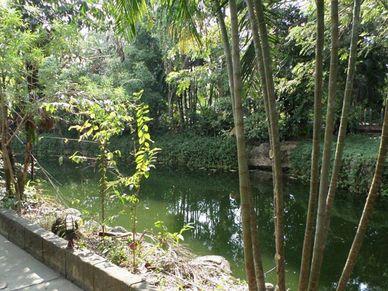 A pond alongside the driveway
