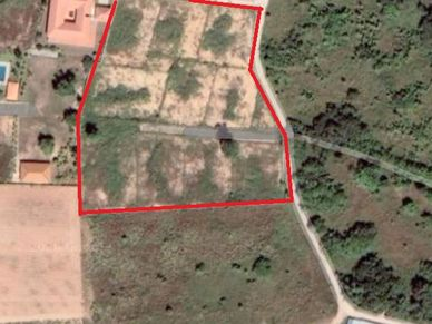 Aerial view of the whole plot