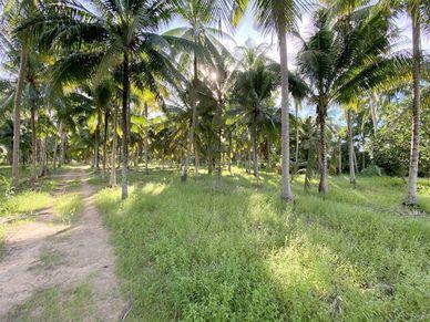 An idyllic plot of land