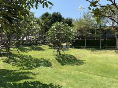 Lush greenery as an oasis in Pattayas center