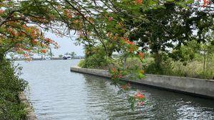 Lush waterways