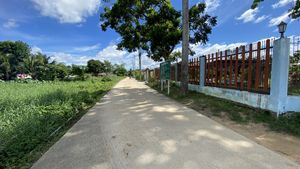 The access road to the plot