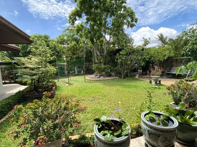The garden and outdoor space
