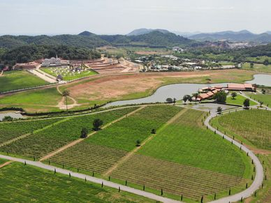 The local vineyard and high-end housing is there as well