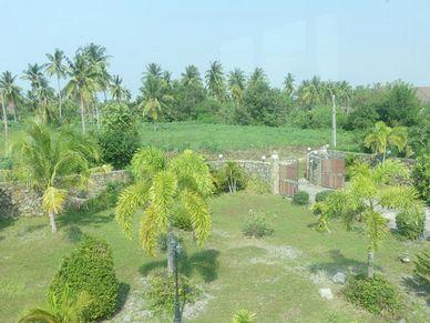 Views across peaceful greenery