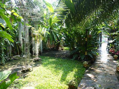 Walking through tropical gardens