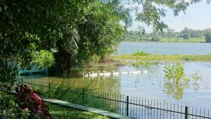 Watch the geese from your terrace